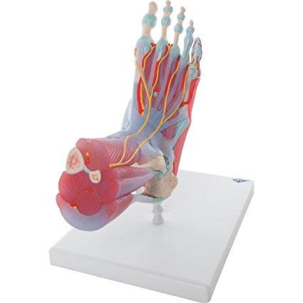 Chaussures à talons hauts : quel impact sur mon corps ? - Talondoux
