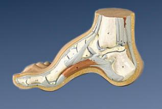 pieds_creux (5)